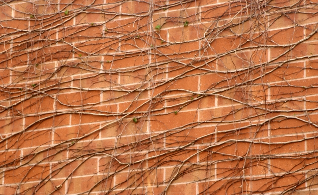Vines and bricks 003, Ridgedale Library