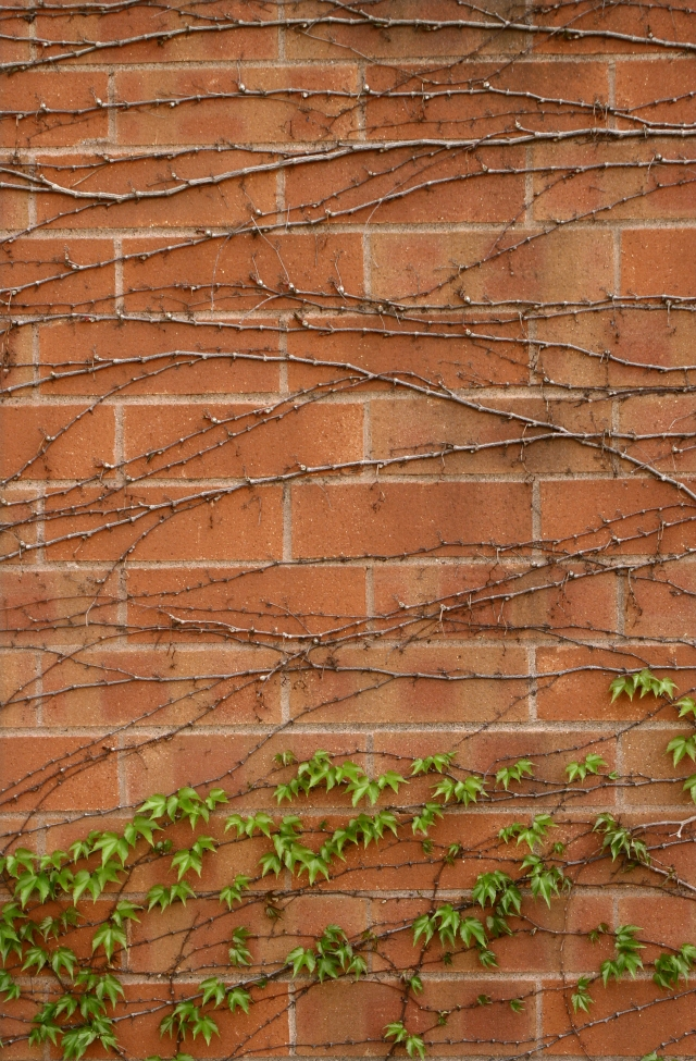 Vines and bricks 006, Ridgedale Library