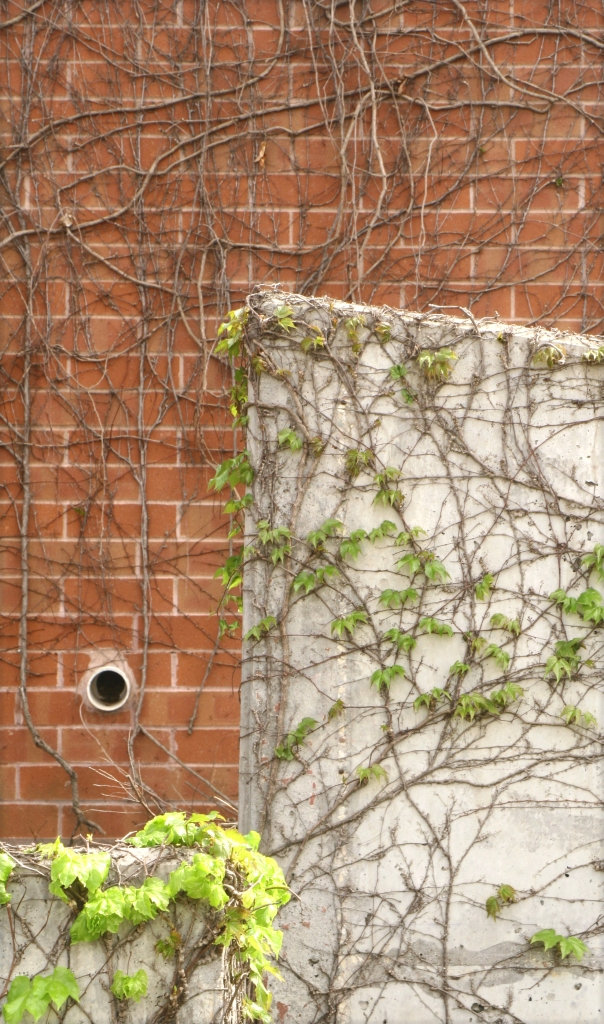 Vines and bricks, Ridgedale Library