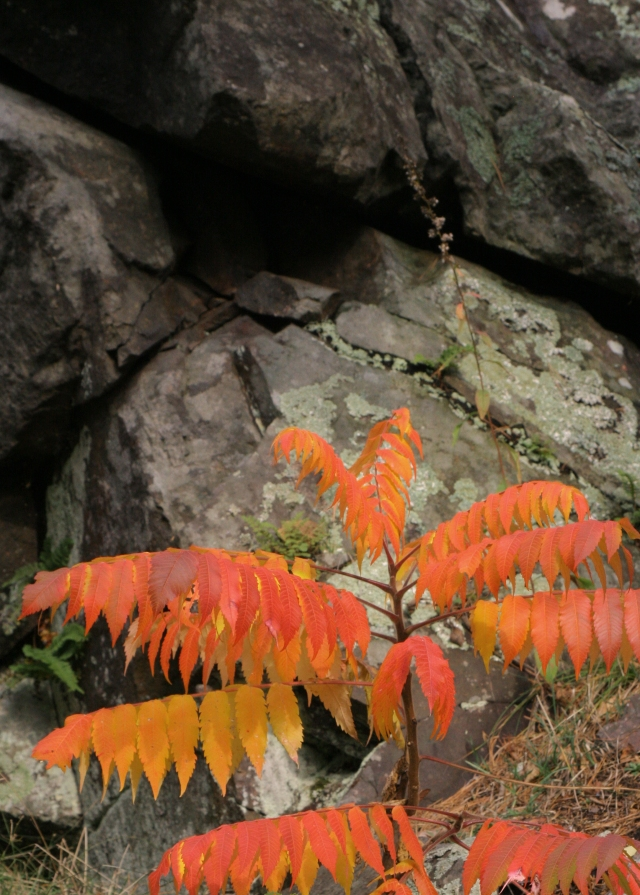 Can you Sumac what the Rock is cooking