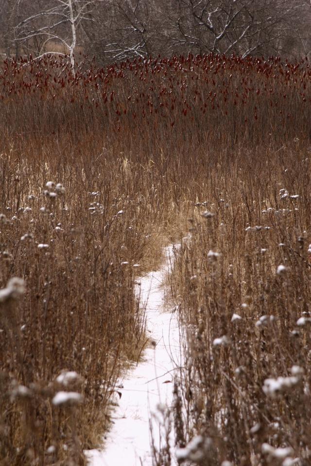 Path into a sumac patch, Purgatory Creek Park, Mtka
