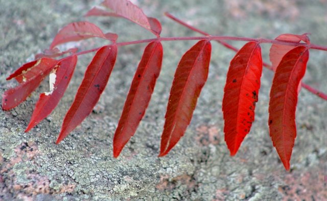 sumac and granite rock