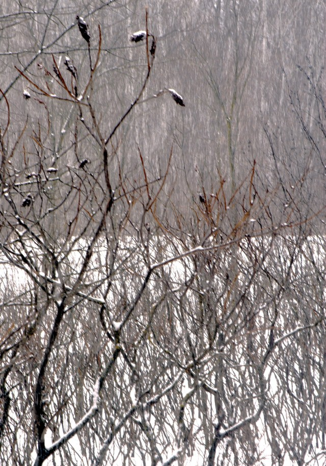 Sumac in the snow, Lake Marie State Park