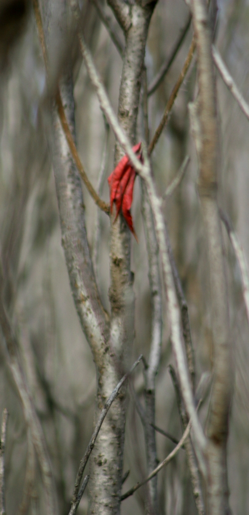 Sumac Leaves- tight crop