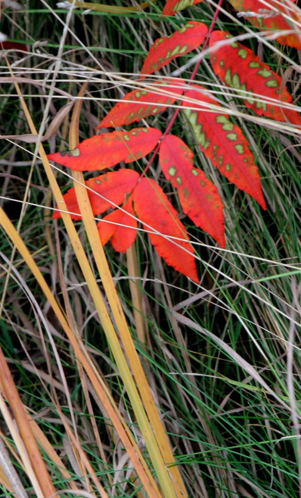 Sumac with grasses Interstate SP WI