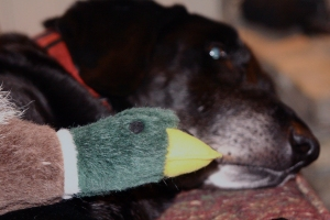 Junior and his duck squeek friend