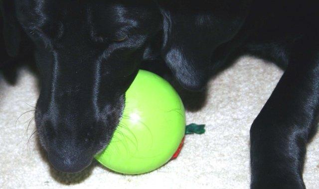 Junior chews in, Christmas Morn 05 #1