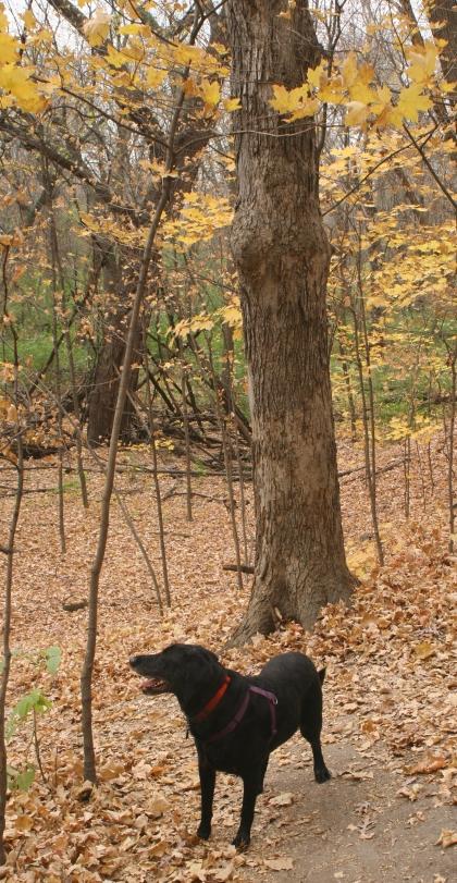 Junior in WHS woods Oct 2010