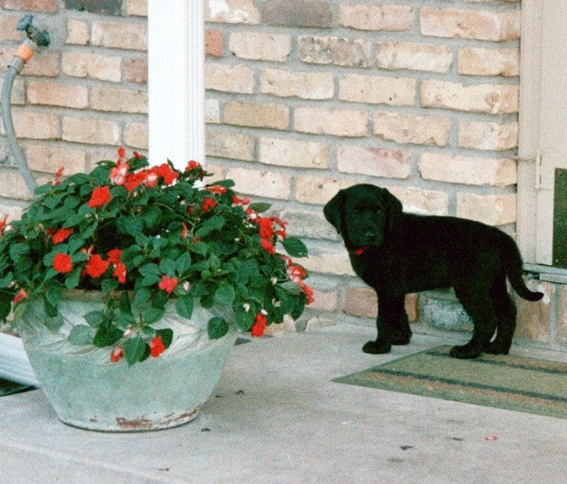 Junior meets the flower pot