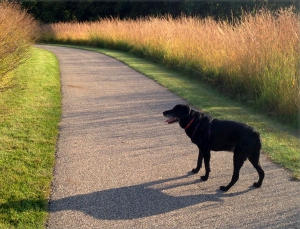 Junior on the path at Millennium Garden, Plymouth