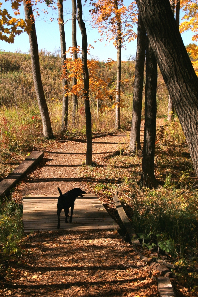 On the trail with junior