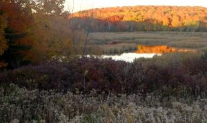 Baker Park landscape at dusk