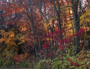 Fall forest, Parkers Lake