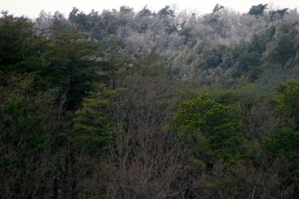 A touch of frozen rain, GA hills near Dalton GA