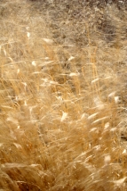 Grasses in the spring breeze