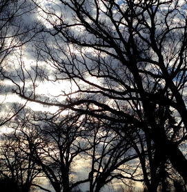Late day sky and oak tress Parkers Lake