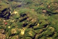 Swirls of early Algea Miersville Ravine Cty Park