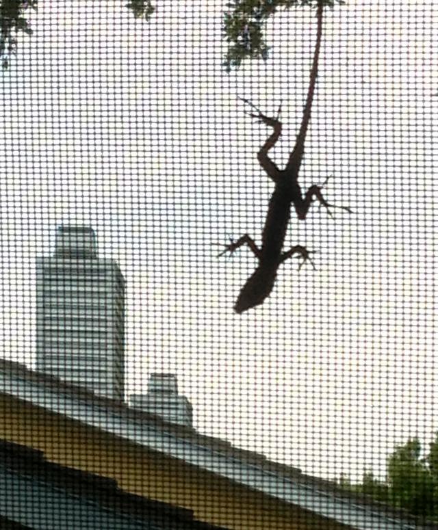 Gecko screen attachment