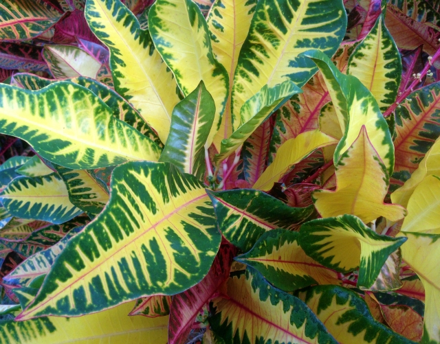 Leaf color study, Sarasota Florida