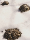 3 piles of decaying grasses poking thru the snow, Rum River Central 002
