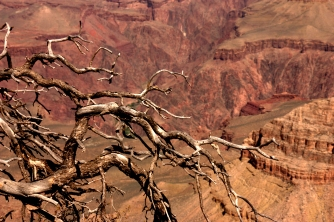 Branches and the Grand Canyon 3.16.16