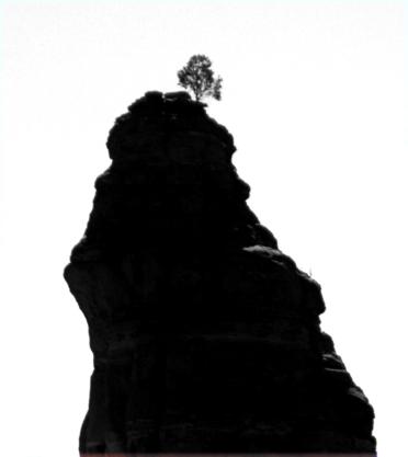 Lone tree on stone perch, Feys Canyon trail