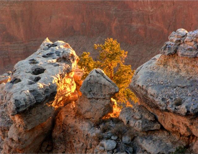 Tree light, Grand Canyon 3.17.16