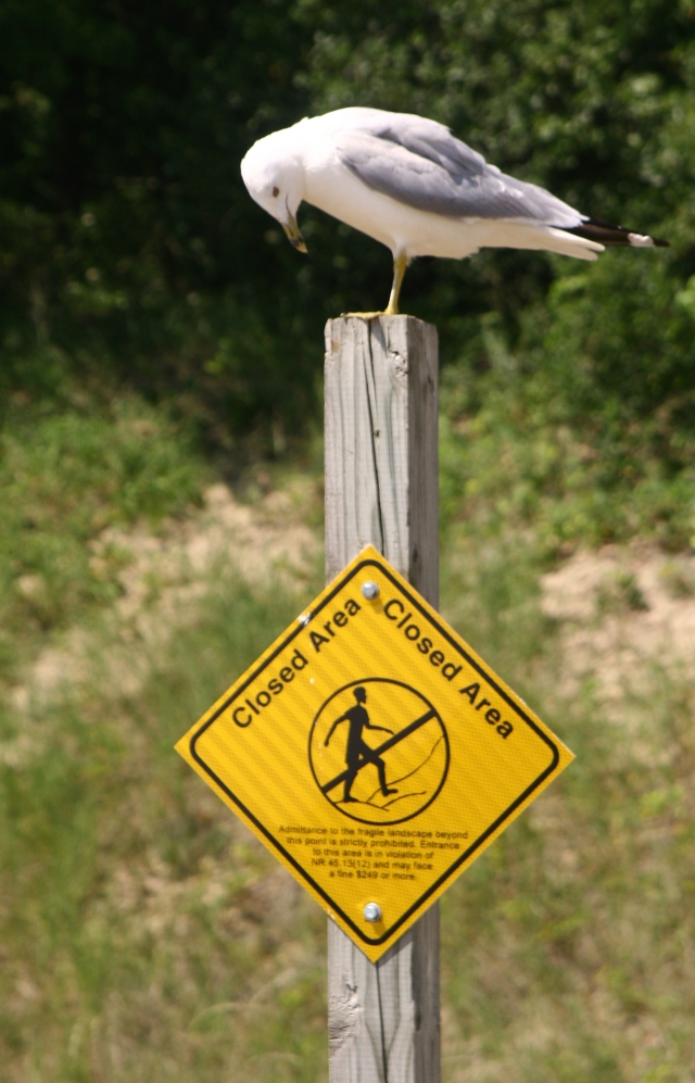 gull-dang-it-who-put-that-sign-there