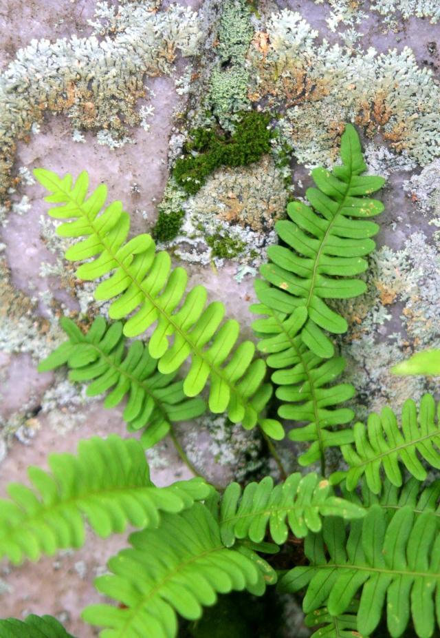 moss-and-fern-rib-mountain
