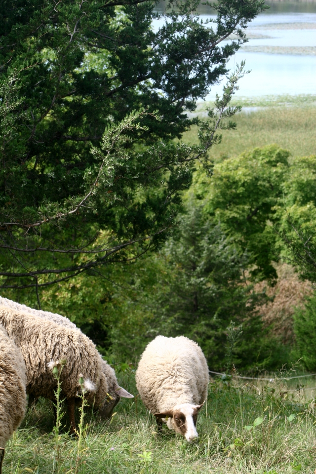 greener-pastures-gale-farms