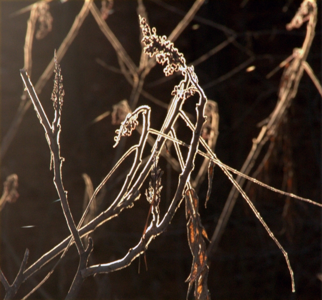 outlined-in-light-sumac-branches