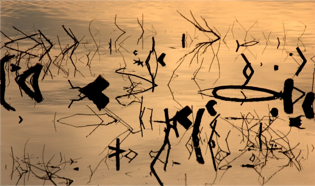 stumps-and-sticks-abstract-three-pond-park