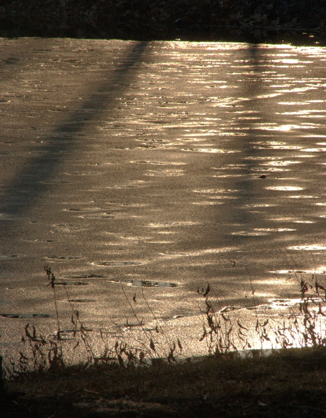 tree-shadows-on-spotted-pond-hilde-center-area
