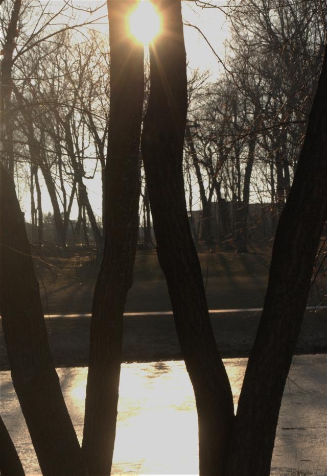 tree-squeezed-sunlight-hilde-center-area