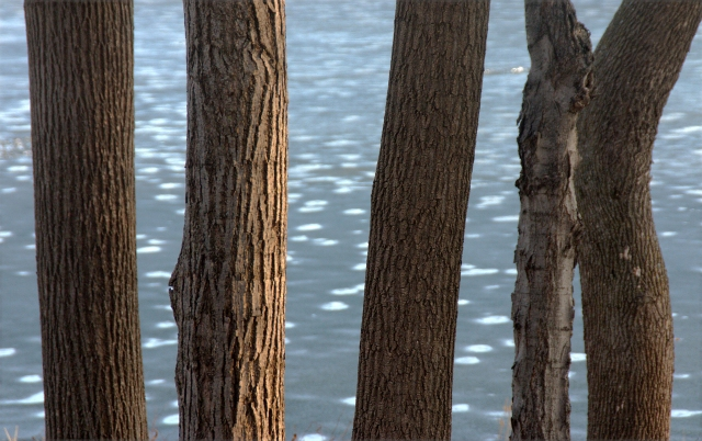 trees-and-spotty-ice-hilde-center-area