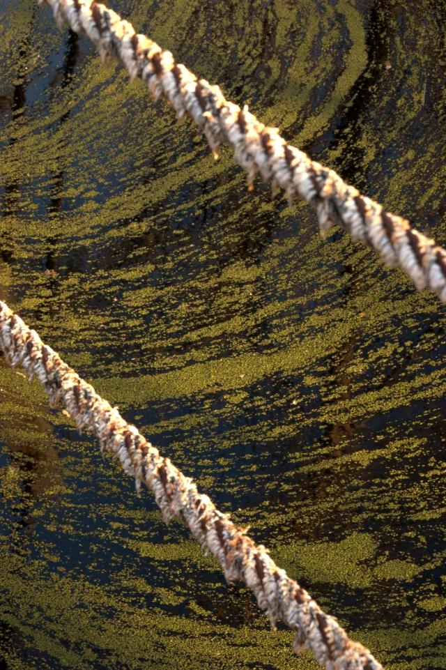 broadwalk-ropes-and-duckweed-patterns-westwood-nature-center