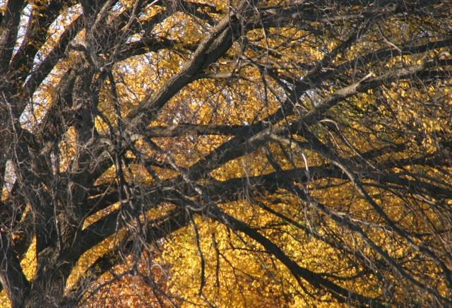 fall-leaf-umbrella-edina