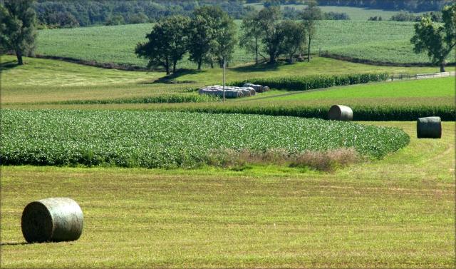 green-county-landscape