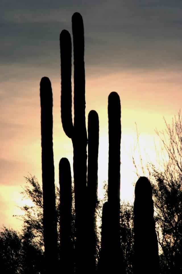 saquaro-sunset-002-nw-tuscon-3-21-16
