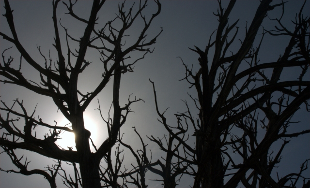 sunblock-branches-south-rim-grand-canyon-3-16-16