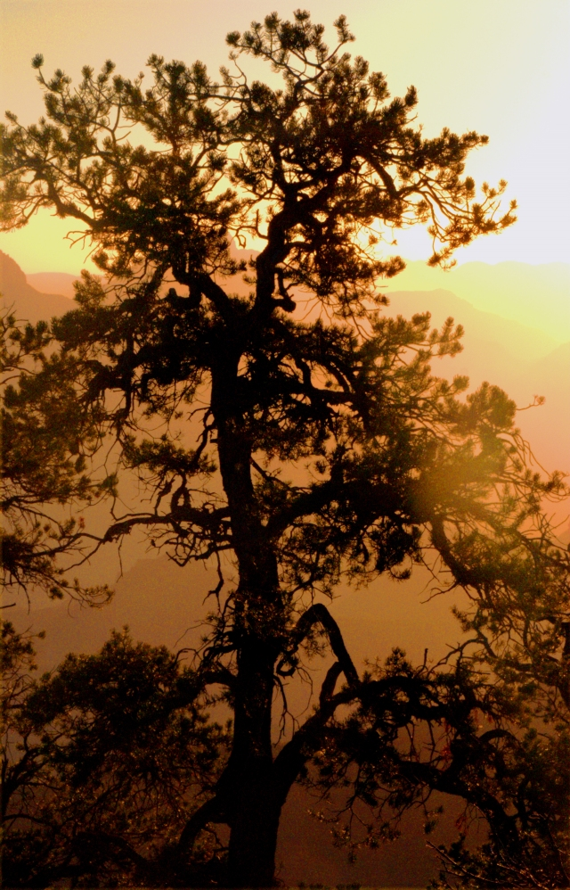 tree-of-light-grand-canyon-4541