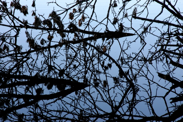 dead-branches-and-reflection-wolsfed-lake