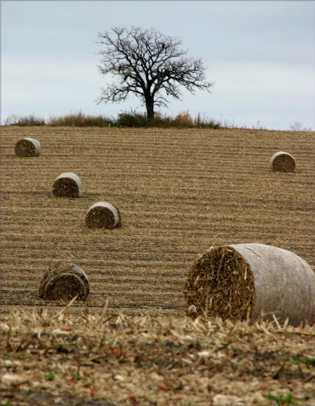 silage-bails-landscape-rural-southern-mn