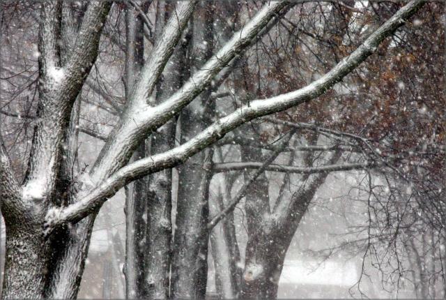 winter-coating-3